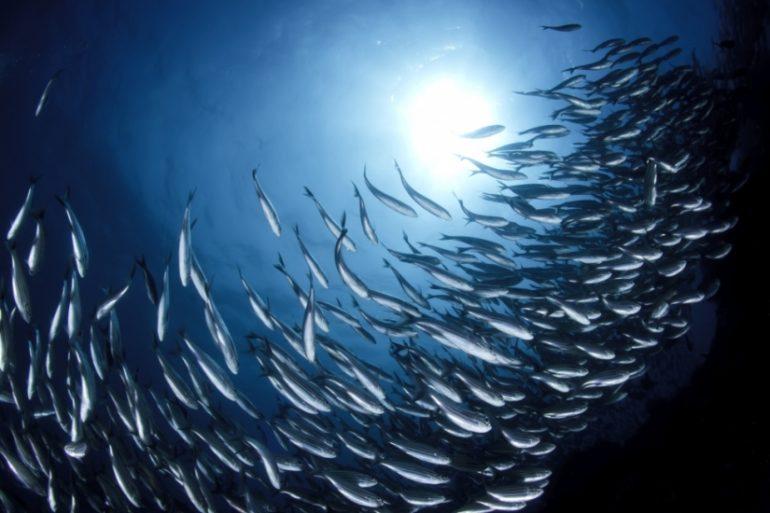 The sharing economy - fish