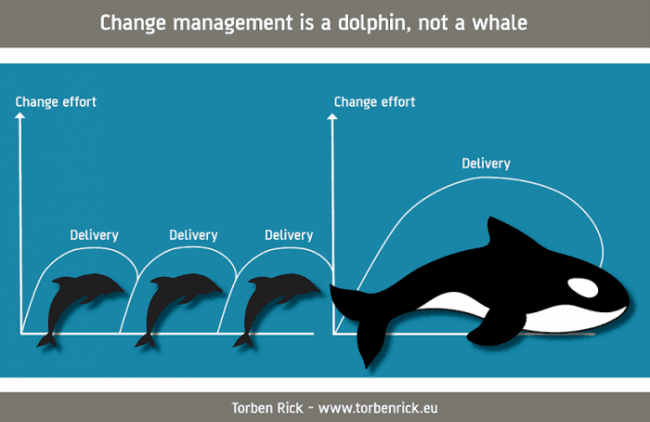 Organizational change - Sustaining change - Think dolphins and not whales