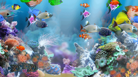 Culture aquarium