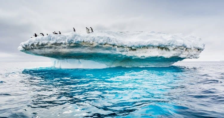 The iceberg is melting. A colony of penguins who lived on their iceberg for many years